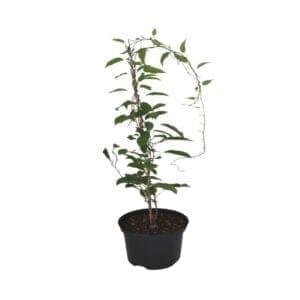 Rośliny ogrodowe- 610059 2