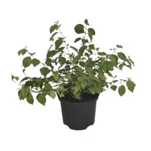 Rośliny ogrodoew- 100172 1