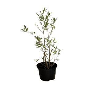 Rośliny ogrodowe- 100421 1