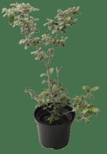 Rośliny ogrodowe-100411 2