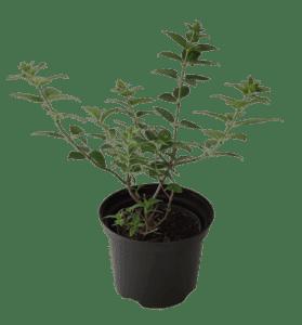 rośliny ogrodowe- 100741 2