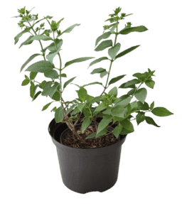 Rośliny ogrodowe- 100742 2