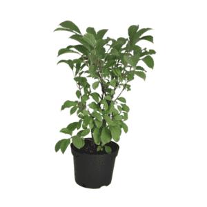 Rośliny ogrodowe-100182 1