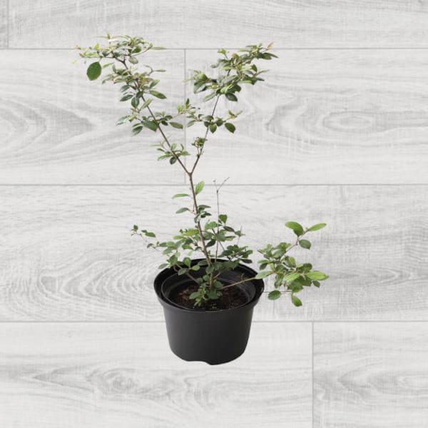 Rośliny ogrodowe-100411