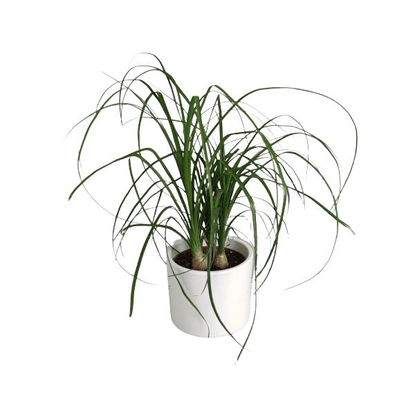 Roślina domowa-630052