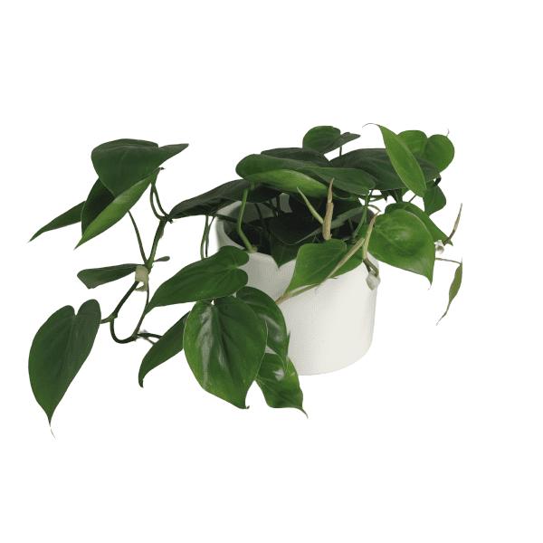 Rośliny domowe- 630081