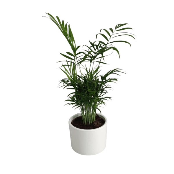 Rośliny domowe- 630257