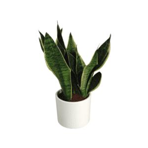 Rośliny domowe-630533